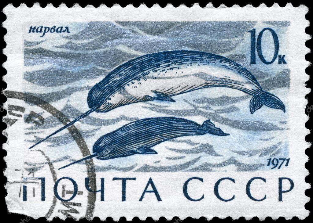 USSR - CIRCA 1971: A Stamp printed in USSR shows image of a Narwhals from the series Sea Mammals, circa 1971 — Stock Photo #6264005