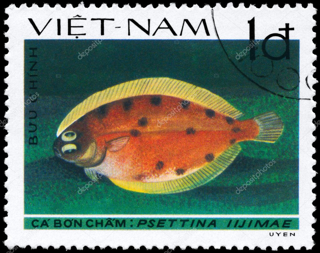 VIETNAM - CIRCA 1982: A Stamp printed in VIETNAM shows image of a Lefteye Flounder with the inscription Psettina iijimae from the series Fish, circa 1982 — Stock Photo #6264025