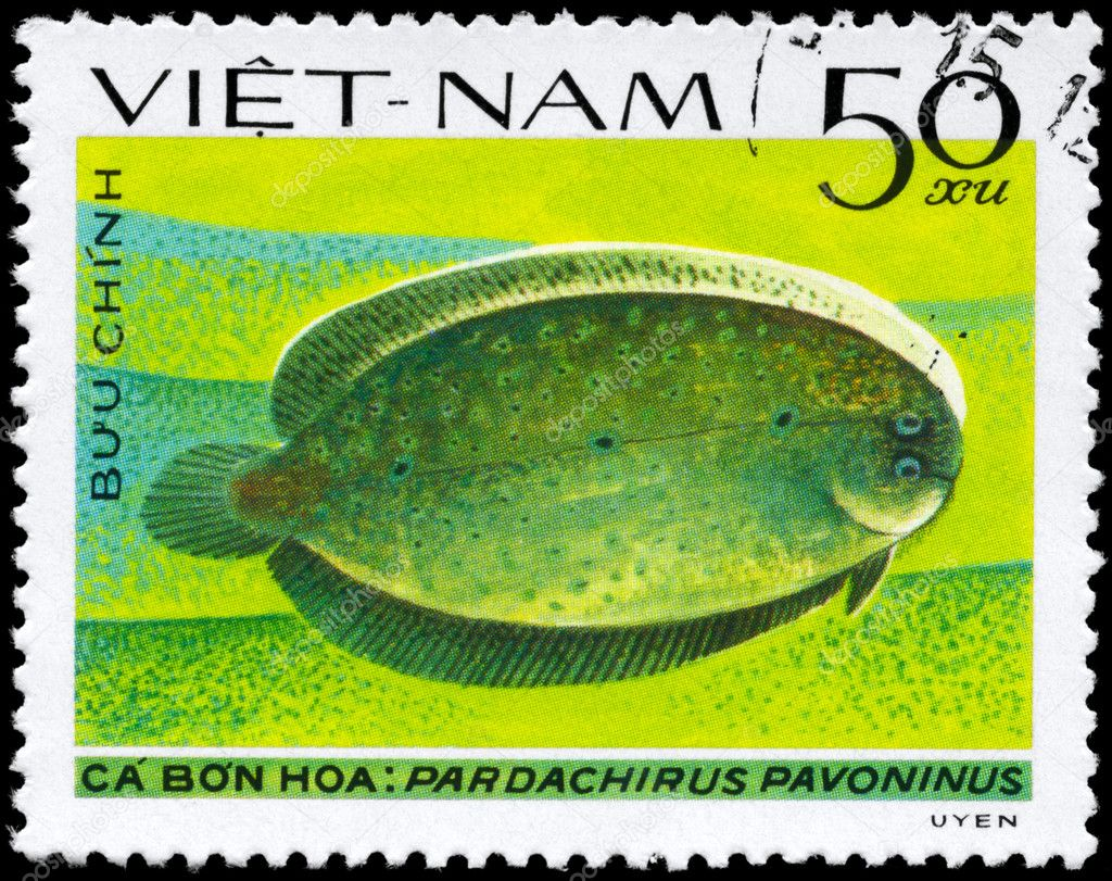 VIETNAM - CIRCA 1982: A Stamp printed in VIETNAM shows image of a Peacock Sole with the inscription Pardachirus pavoninus from the series Fish, circa 1982 — Stock Photo #6264026