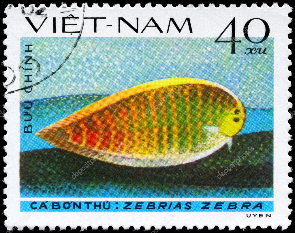 VIETNAM - CIRCA 1982: A Stamp printed in VIETNAM shows image of a Zebra Sole with the inscription Zebrias zebra from the series Fish, circa 1982 — Stock Photo #6264033