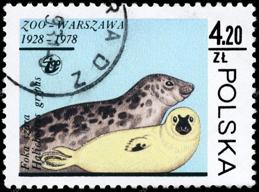 POLAND - CIRCA 1978: A Stamp printed in POLAND shows image of a Gray Seals with the description Halichoerus grypus from the series Animals, circa 1978 — Stock Photo #6264043