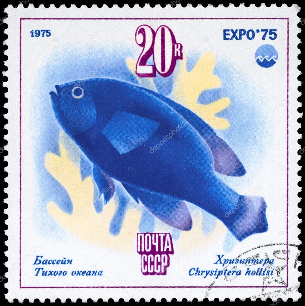 USSR - CIRCA 1975: A Stamp printed in USSR shows image of a Chrysiptera with the description Pacific Ocean - Chrysiptera hollisi from the series Oceanexpo 75  Stock Photo #6264053