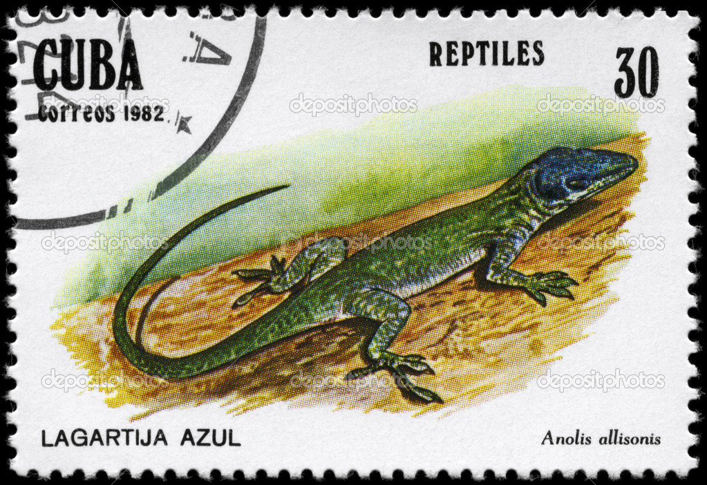 CUBA - CIRCA 1982: A Stamp printed in CUBA shows the image of a Lizard with the description Anolis allisonis from the series Reptiles, circa 1982 — Stock Photo #6267713