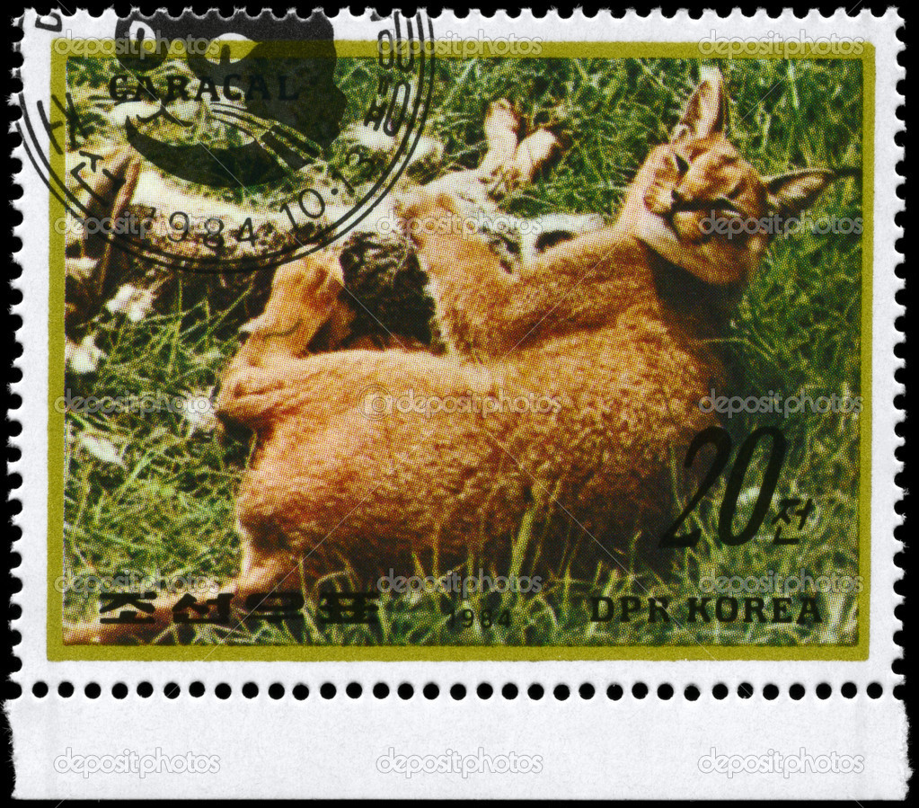 NORTH KOREA - CIRCA 1984: A Stamp printed in NORTH KOREA shows image of a Caracal with prey from the series Wild Animals, circa 1984 — Stock Photo #6267772