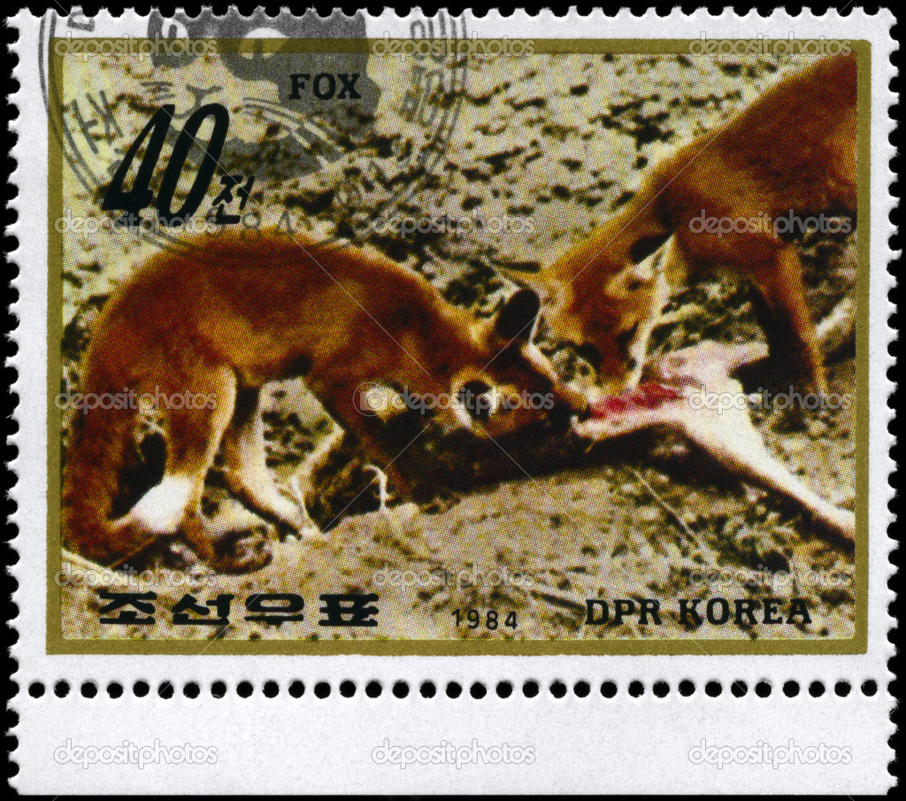 NORTH KOREA - CIRCA 1984: A Stamp printed in NORTH KOREA shows image of a Foxes with prey from the series Wild Animals, circa 1984 — Stock Photo #6267794