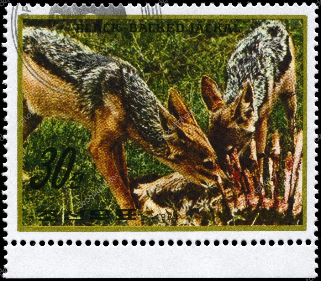 NORTH KOREA - CIRCA 1984: A Stamp printed in NORTH KOREA shows image of a Black-backed Jackals with prey from the series Wild Animals, circa 1984 — Stock Photo #6267828