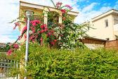 House in tropics — Stock Photo