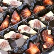 Chocolate seashells — Stock Photo