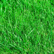 Ideal grass — Stock Photo