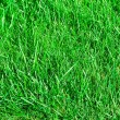 Stock Photo: Ideal grass