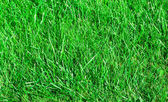 Ideal grass — Foto Stock