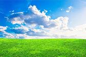 绿色草原 — 图库照片