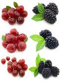Blackberry with cranberry — Stock Photo