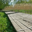 Old wooden pier on the marsh in reeds - Stock Photo