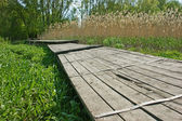 Old wooden pier on the marsh in reeds — Stock Photo