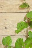 Réva na dřevěné pozadí — Stock fotografie