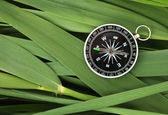 Compass glass on leaves of cane — Stock Photo