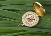 Compass on leaves of cane — Stock Photo