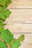 Grapevine on a wooden background — Stock Photo