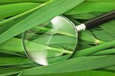 Lupa nas folhas de cana-de- — Fotografia Stock