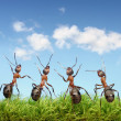 Perfect work team concept, ants under blue sky — Stock Photo