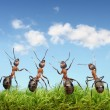 Perfect work team concept, ants under blue sky — 图库照片