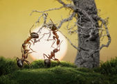 Ants know to play games, scientific fact — Stock Photo