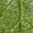 Natural background - sparkling raindrops on leaf — Stock Photo #5483488