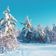 Stock Photo: Winter snow forest