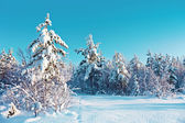 Winter snow forest — Stockfoto