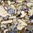 Shells and coral on a tropical beach - background — 图库照片