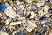 Shells and coral on a tropical beach - background — Stock Photo
