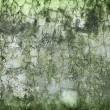 Concrete wall green with time and moisture — Stock Photo