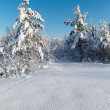 Snowy winter forest — Stock Photo #6291366