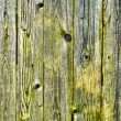Green with damp, wooden fence — Stock Photo #6330364