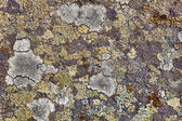 Granite rocks covered with lichen — Stock Photo