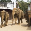 Elephants on the srtreet - Stock Photo