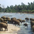 Elephants bathing — Stock Photo #5873785