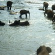 Elephants bathing — Stock Photo #5962568
