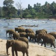 Elephants bathing — Stock Photo #6038936