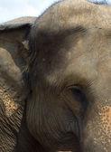 Éléphant — Photo
