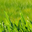Blade of grass - Photo