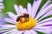 Bloem en bee — Stockfoto