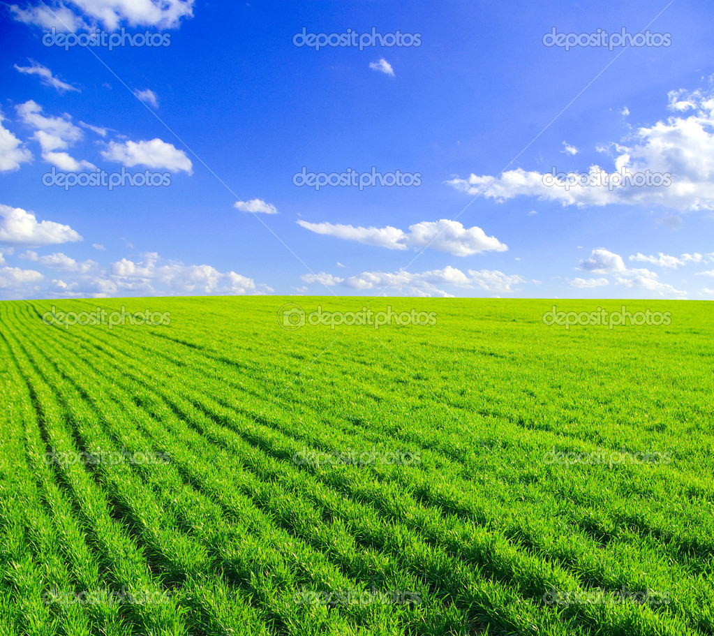 Green grass the blue sky and white clouds — Stock Photo #5553078