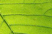 葉の構造 — ストック写真