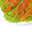 Crayfish on white — Stockfoto