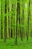 Forest background — 图库照片