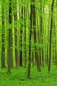 Sfondo foresta — Foto Stock