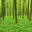 Green forest — Stock Photo #5908021