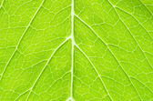 Structure of leaf — Stockfoto